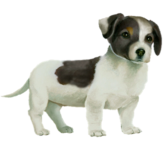 Jack Russell Chiot - robe 35