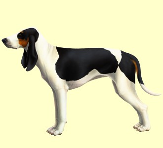 Chien courant bernois ##STADE## - robe 53