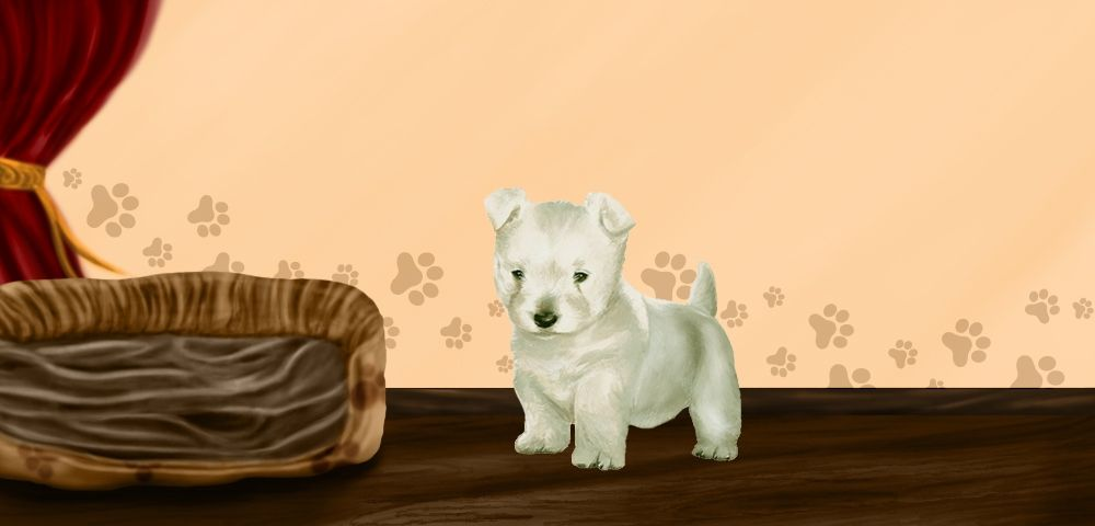 Snoopy - West Highland White Terrier de 2 mois