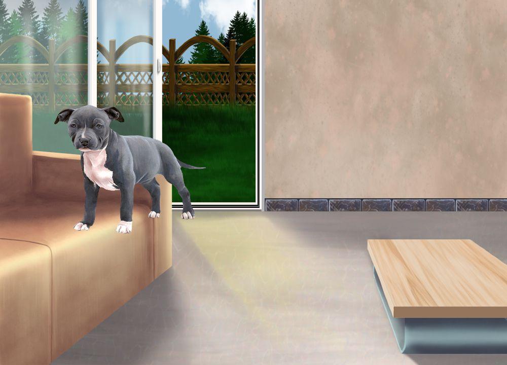 vita - American Staffordshire Terrier de 1 mois