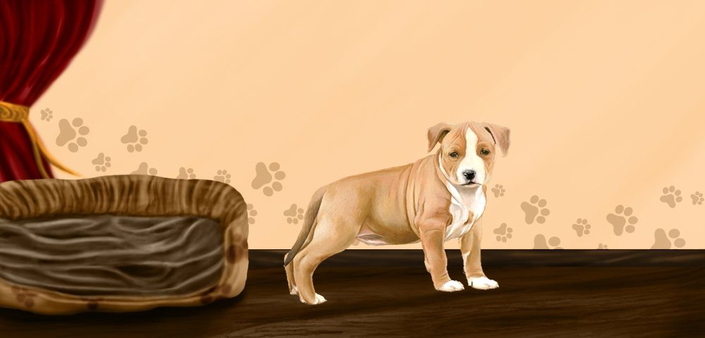 blunt - American Staffordshire Terrier de 3 mois