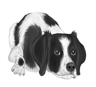 https://data.dogzer.com/img/31-race-chiens-epagneuls-bretons/348-robe-/2-chien-epagneul-breton-2.png