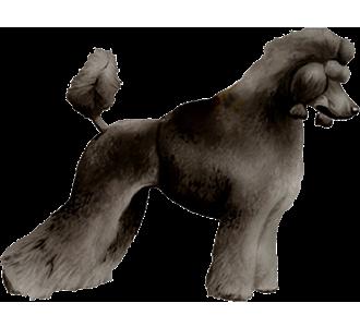Caniche chien - robe 51
