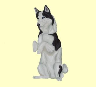 Husky Adulte - robe 1081