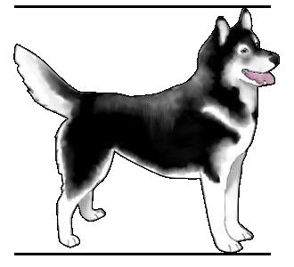 Husky chien - robe 382