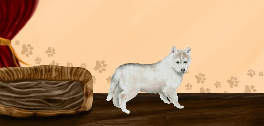 CANNELLE - Husky Sibérien de 1 mois