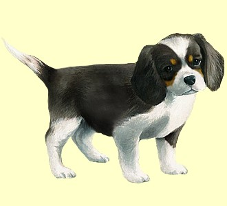 Cavalier King Charles Chiot - robe 64