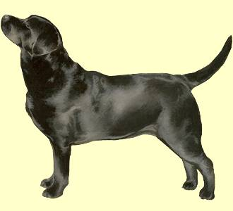 chien courant lucernois