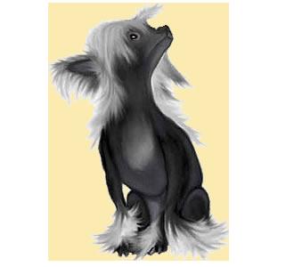 Chien nu de Chine chien - robe 195