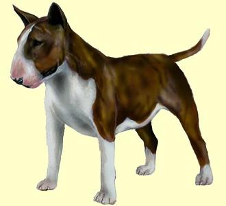 Bull terrier ##STADE## - robe 9
