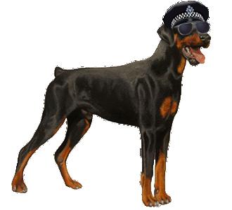 Dobermann chien - robe 723