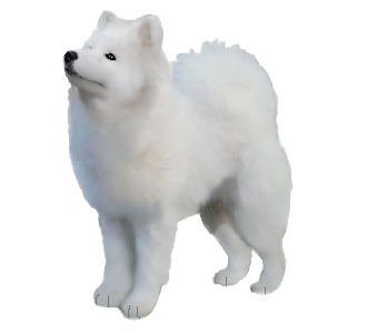 Samoyede Adulte - robe 1178