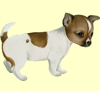 Recueillir un chien de race chihuahua