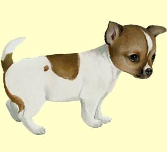 Jeu De Chien Pour Adopter Un Chien Virtuel Dogzer