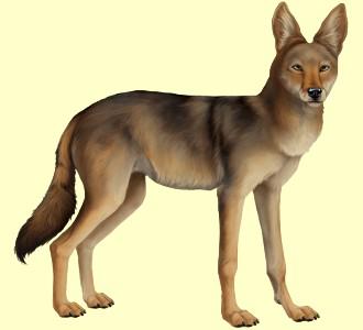 Coyote ##STADE## - robe 52
