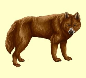 Dingo ##STADE## - robe 1257