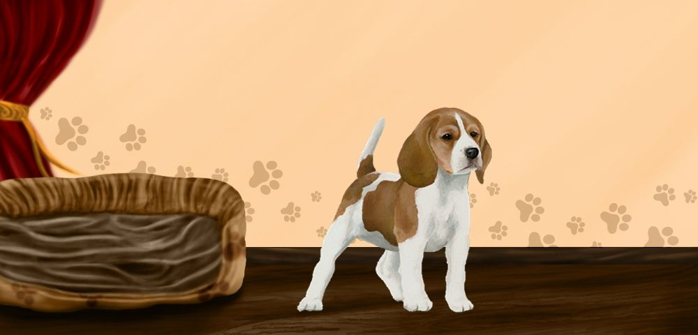 lola - Beagle de 1 mois